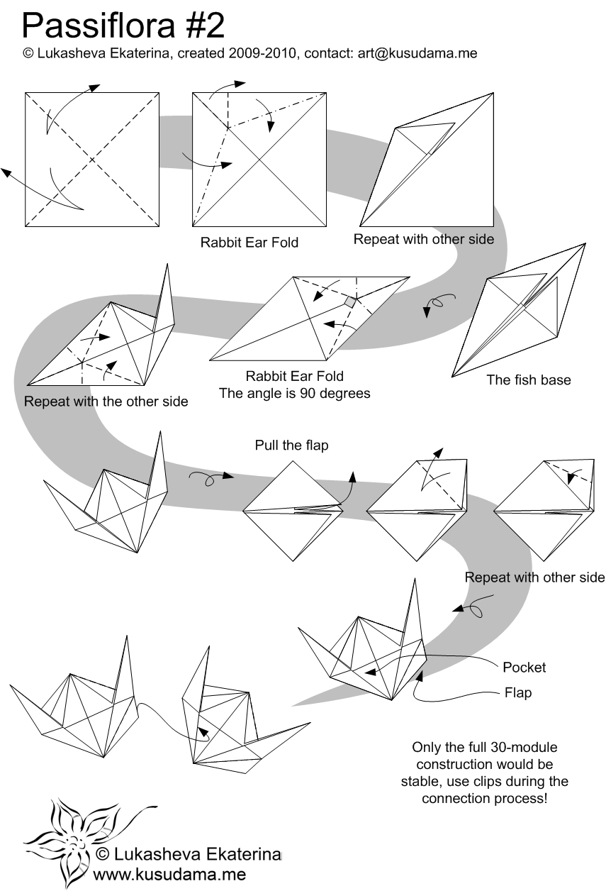 Diagram for Passiflora_Rhomb kusudama